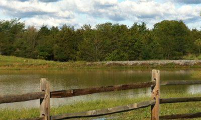 Frederick County Farm