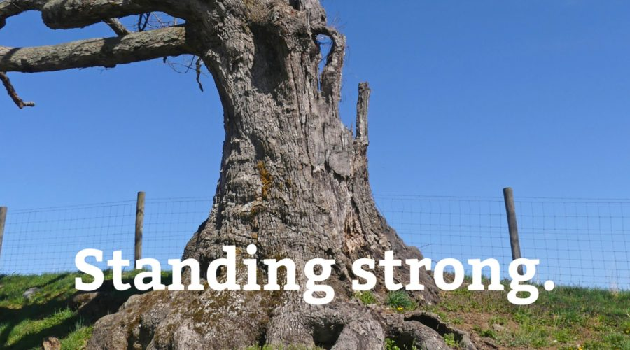 standing strong tree