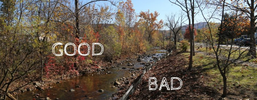Trees & Your Local Watershed